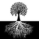 Árvore com raizes no fundo preto e branco Fotos de Stock Royalty Free