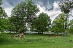 Árvore com ramo interrompido no distrito do lago Fotografia de Stock Royalty Free