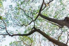 Árvore com ramo nos jardins Fotos de Stock