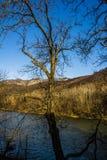 Árvore com ramos Fotografia de Stock