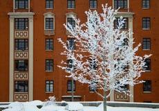 Árvore com rime Imagens de Stock