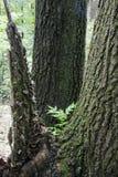 Árvore com seção quebrada fotos de stock