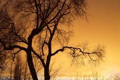 Árvore com silhueta do por do sol imagem de stock royalty free