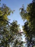 Árvore com sol Imagens de Stock