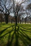 Árvore com sombra Foto de Stock Royalty Free