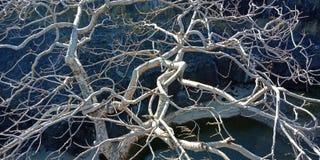 A árvore com um rio ou uma montanha, natureza ajardina, Índia de Lakhnadon, imagem tomada em fevereiro de 2018, fundo das paisage Fotografia de Stock