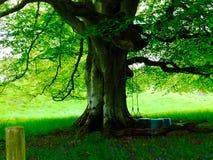 Árvore com uma balancê em um jardim escocês Imagem de Stock
