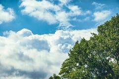 A árvore com verde sae do brilho no céu azul Fotografia de Stock