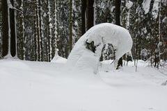 Árvore conífera curvada em montanhas de Beskydy Fotos de Stock