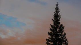 Árvore conífera no fundo do céu Foto de Stock Royalty Free