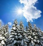 Árvore congelada imagem de stock royalty free