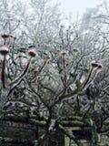 Árvore congelada Foto de Stock