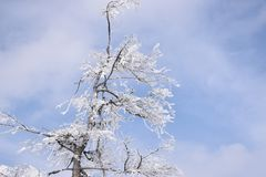 Árvore congelada Fotografia de Stock Royalty Free