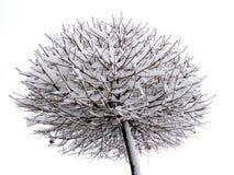 Árvore congelada Imagens de Stock