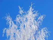 Árvore congelada foto de stock royalty free