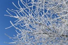 Árvore congelada Imagens de Stock Royalty Free
