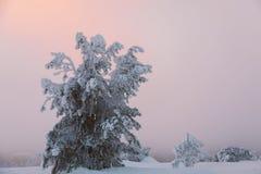 Árvore congelada Fotografia de Stock
