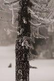 Árvore congelada do tronco imagem de stock
