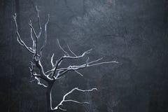 Árvore congelada na frente do fundo escuro imagens de stock
