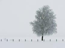 Árvore congelada pelo mar Imagens de Stock