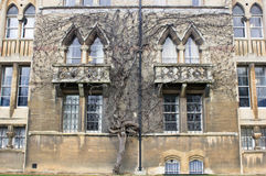 Árvore congelada a tempo Foto de Stock