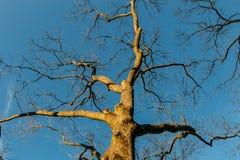 Árvore contra o céu azul fotos de stock
