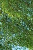 Árvore contra o céu azul na brisa Imagem de Stock Royalty Free