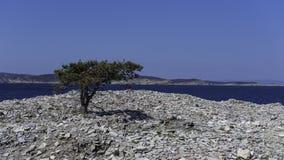 Árvore contra a pedreira de pedra Fotos de Stock Royalty Free