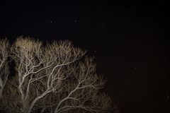Árvore contra uma noite estrelado imagens de stock royalty free
