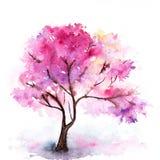 Árvore cor-de-rosa de sakura da cereja da aquarela única isolada Fotografia de Stock