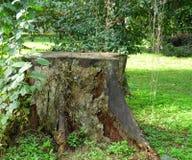 Árvore cortada Elimine o tronco Vida rural imagens de stock