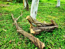 Árvore cortada sobre a grama verde no parque para salvar a árvore e para salvar a vida imagem de stock