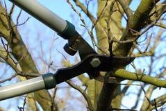 A árvore cortou 10 Imagem de Stock Royalty Free