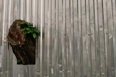 A árvore cresce através da cerca do perfil do metal fotos de stock