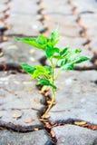 A árvore cresce no assoalho Fotografia de Stock Royalty Free