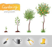 Árvore crescente Fotos de Stock Royalty Free
