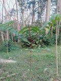 Árvore crescente Fotografia de Stock