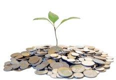 Árvore crescente do dinheiro Fotografia de Stock
