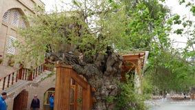 Árvore crescida na estrutura de construção video estoque