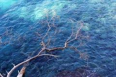 Árvore crimeana sobre a paisagem do mar imagens de stock