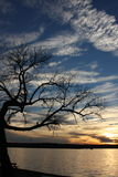 Árvore curvada Fotografia de Stock Royalty Free