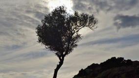 Árvore curvada em Tunísia, Norte de África fotografia de stock