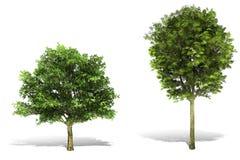 a árvore 3d rende no fundo branco fotos de stock