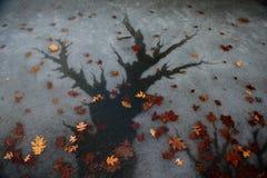 Árvore da água Foto de Stock Royalty Free