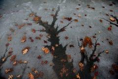 Árvore da água Imagens de Stock Royalty Free