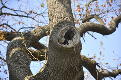 Árvore da agreira fotos de stock