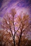 Árvore da aquarela Imagens de Stock