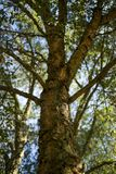 Árvore da bolota da casca do carvalho de pequena ilha em um dia ensolarado fotografia de stock