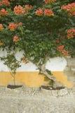 A árvore da buganvília na vila de Obidos fundou pelos Celts em 300 BC, Portugal fotos de stock