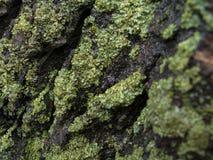 árvore da coberta do musgo foto de stock